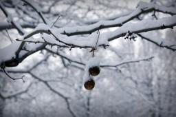 Колючки на дереве
