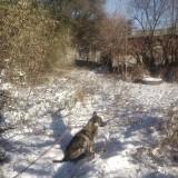 Любительский снимок с телефона Первый снег