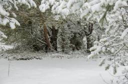 taina-zimnego-lesa