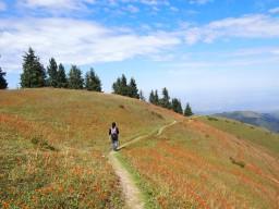 Прогулка среди горных цветов