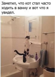 Кот красуется