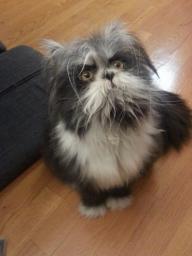 Угадайте кто я ... Кот или собака?