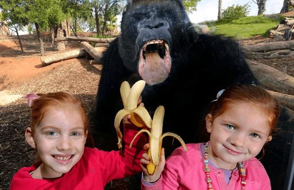 Аккуратнее с бананом