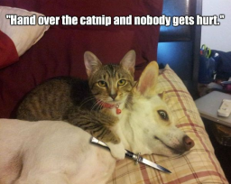 hand-over-the-catnip-and-nobody-gets-hurt