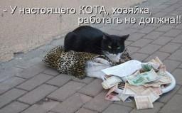 Настоящий кот