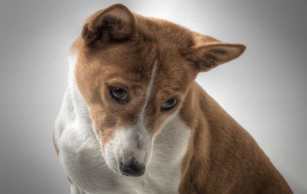 Породы собак,требующие особого внимания