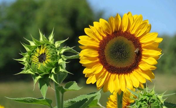 10 самых интересных фактов про цветы