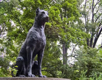 Собаки: Памятник неизвестной собаке...