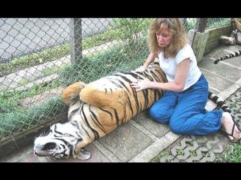 Львы, тигры и гепарды Кроме того, как обнимаются -  Большие кошки Подборка!