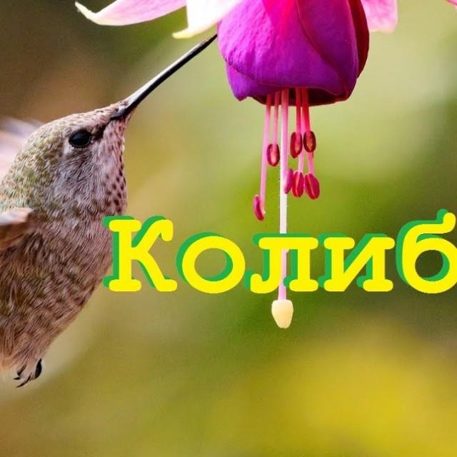 КОЛИБРИ.  Самая маленькая птица на планете.Загодочный Мир природы. Документальные фильмы о природе.