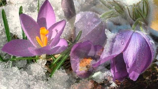 Пробуждение весны. Март. П.И.Чайковский. Из цикла Времена года.