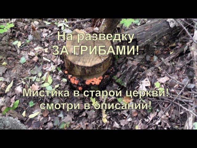 Поехали за грибами, два храма Липецкой области. Мистика в храме.