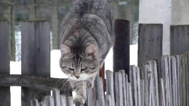 Как передвигается кошка (окружающий мир, 2 класс)