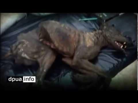 Чупакабра Страшное интересное и невероятное видео, явление