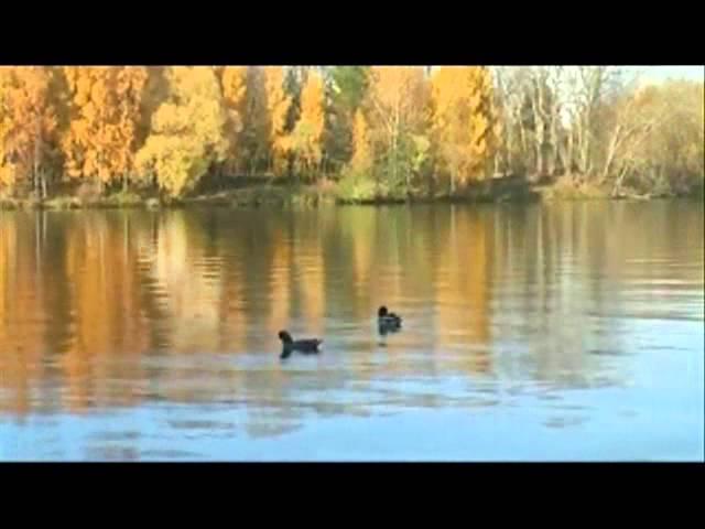 Чайковский .Времена года. Осенняя песнь (1 класс)