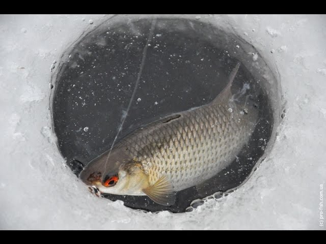 Зимняя рыбалка. Тактика, методы и приемы зимней ловли на мормышку.