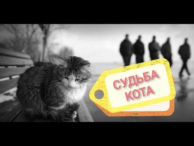 ТРОГАТЕЛЬНОЕ видео о судьбе кота. Стихотворение.