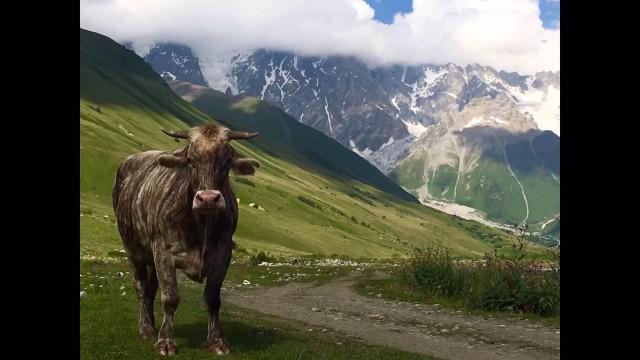 Грузия, Сванетия, Ушгули, ледник Шхара.август 2016г
