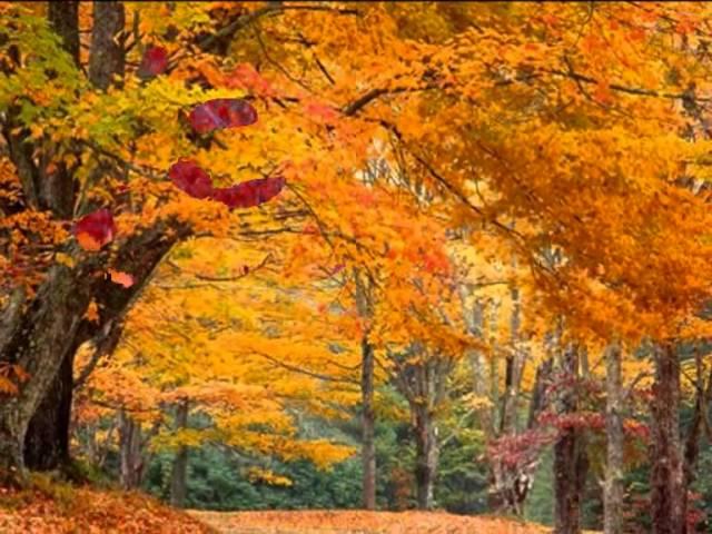 """окружающий мир """"Золотая осень"""""""