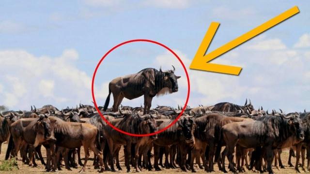 Животные и их повседневная жизнь, которую они скрывают от нас