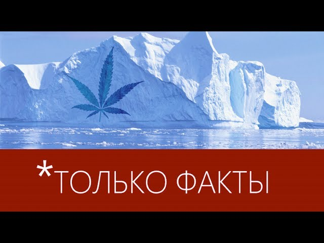 ТОЛЬКО ФАКТЫ #10 — Ледник и Марихуана