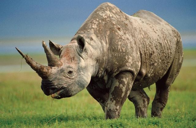 Азия. Самые опасные животные мира.