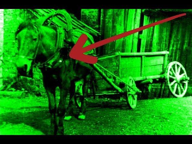Мёртвая лошадь довезла своих хозяев. МИСТИКА !!!