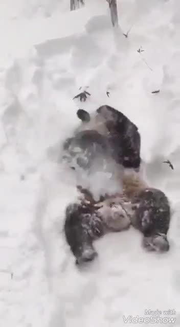 Панда зажигает