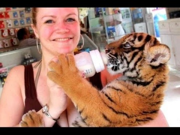 Милые Маленькие Тигры Видео Подборка 2016 [NEW]