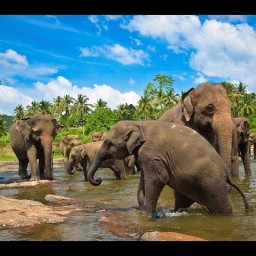 Шри Ланка Дикая природа - дикая природа шри-ланки - чарующая шри-ланка