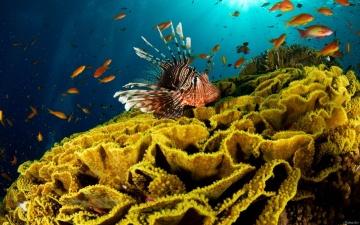 О жизни в океане - Один океан.