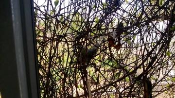 Гнездо за окном