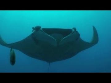 Животные ПОДВОДНОГО Мира Атлантический Океан. Animal Planet HD